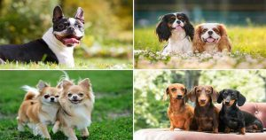 Popular-small-dog